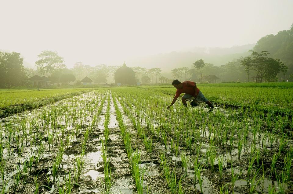 Morning Sunrise Farmer