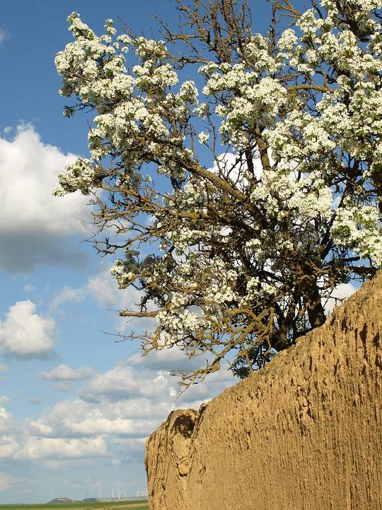 Primavera Barro Flor Foto Gratis En Pixabay