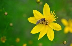 kostenlose vektorgrafik augen biene k fer insekt kostenloses bild auf pixabay 304523. Black Bedroom Furniture Sets. Home Design Ideas