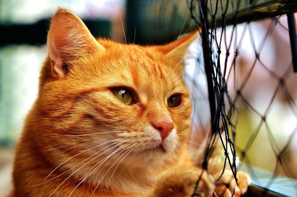 Unduh 93+  Gambar Kucing Rindu Paling Imut Gratis