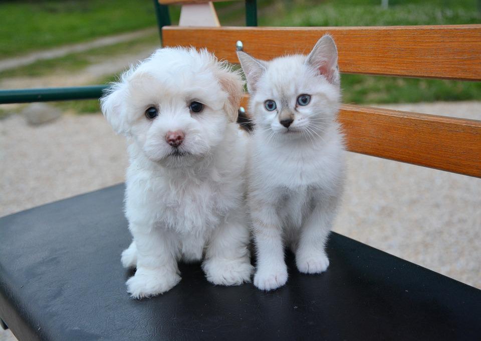 Hund Katt Valp Kattunge Gratis Foto På Pixabay