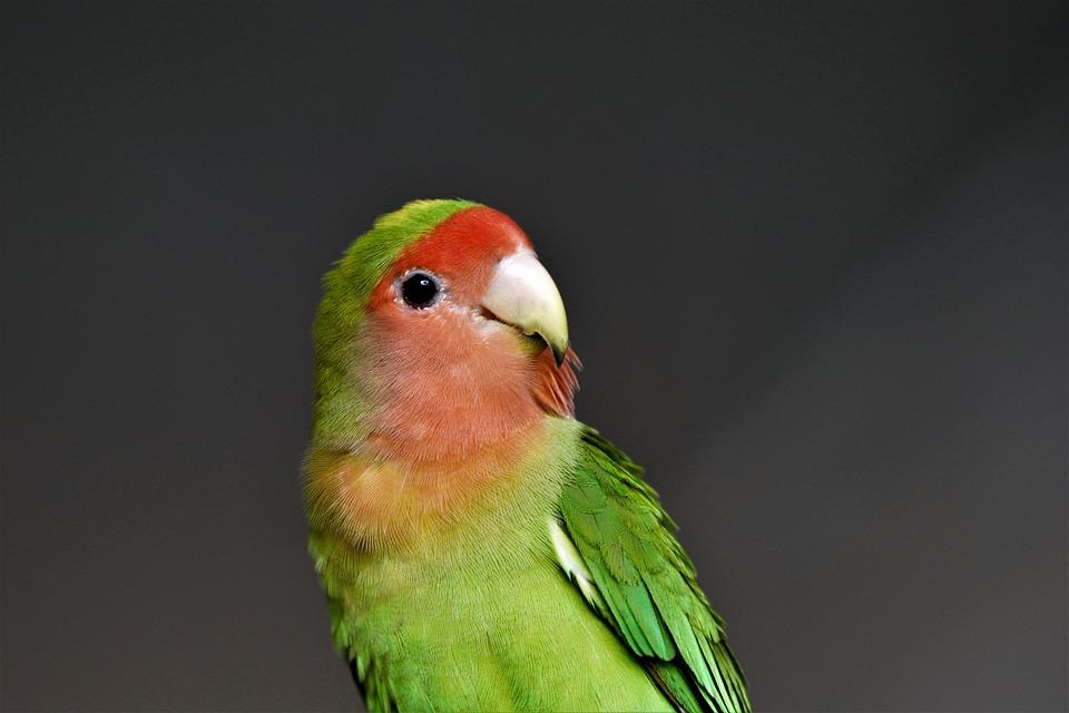 Gambar Burung Lb Lucu