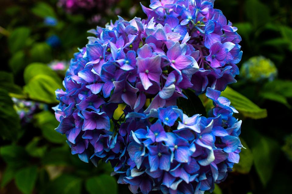 Fleurs Couleur Fleur Photo Gratuite Sur Pixabay