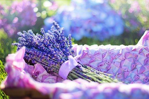 Lavendel, Färska, Blommor, Växtbaserade