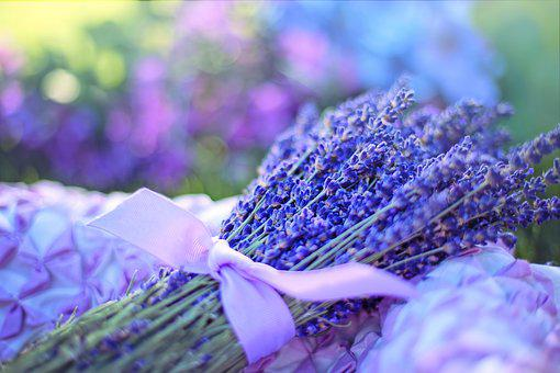 https://cdn.pixabay.com/photo/2017/07/07/19/06/lavender-2482374__340.jpg