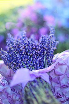 Blue Purple Flower Images Pixabay Download Free Pictures