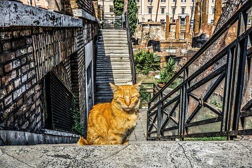 Katze, Katzen, Kätzchen, Rom, Roman