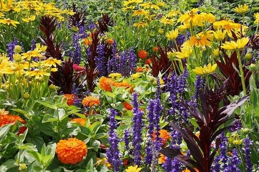 Природы, Цветы, Завод, Сад, Клумба