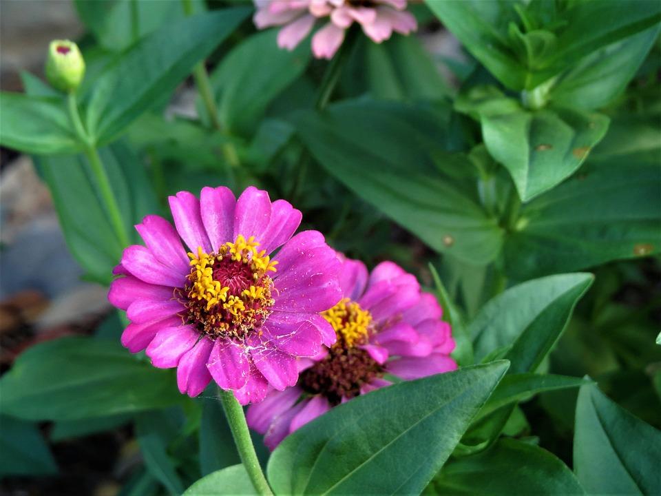 Bunga Warna Merah Muda Kuning Foto Gratis Di Pixabay