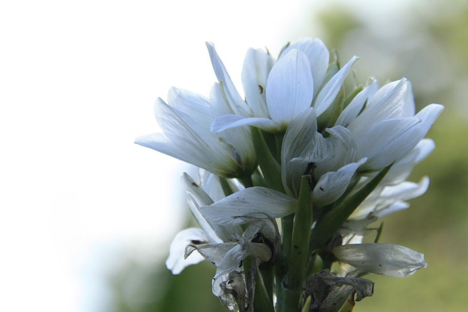Weiße Blume Natur Blumen · Kostenloses Foto auf Pixabay