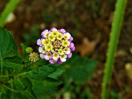 Tiny white flowers images pixabay download free pictures tiny flower blue yellow white green mightylinksfo
