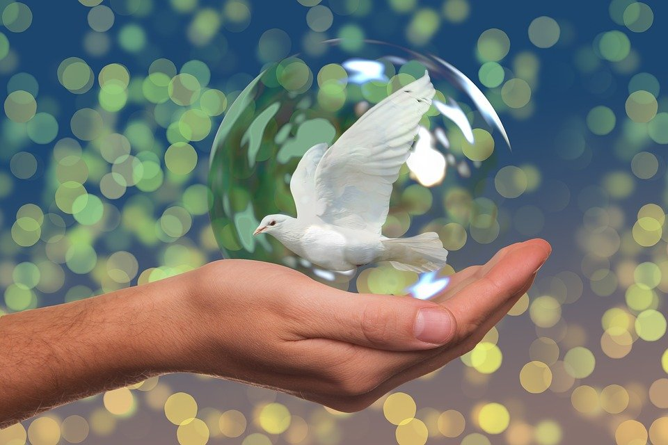 Peace Dove, Harmony, Dove, Hand, Keep, Soap Bubble