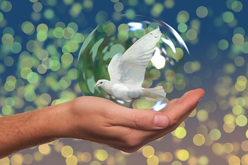 Peace Dove, Harmony, Dove, Hand, Keep