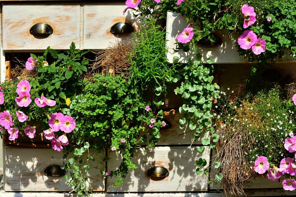 Petunien Balkonpflanzen Kostenloses Foto Auf Pixabay