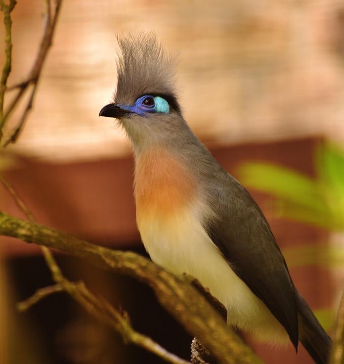 Gambar Gambar Jenis Burung Cendrawasih Kliping Online