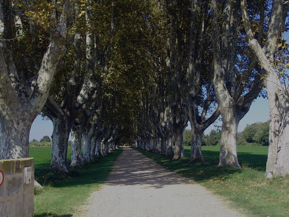 9205c828af49 Francia Viale Fila Di Alberi Tree - Foto gratis su Pixabay