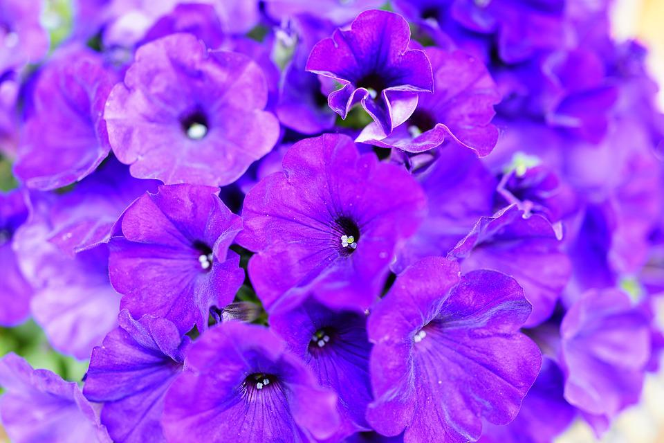 cdn.pixabay.com/photo/2017/07/11/15/26/purple-2493896_960_720.jpg