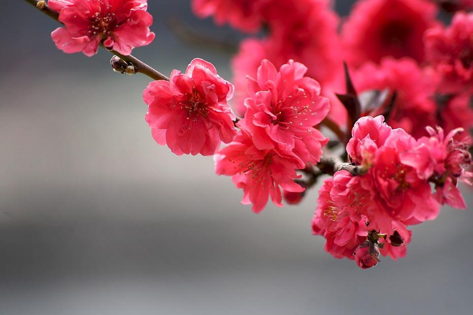kuvia kukista