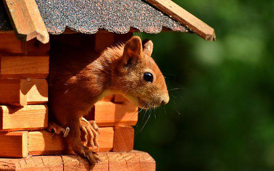Squirrel, Nager, Garden, Rodent, Nature