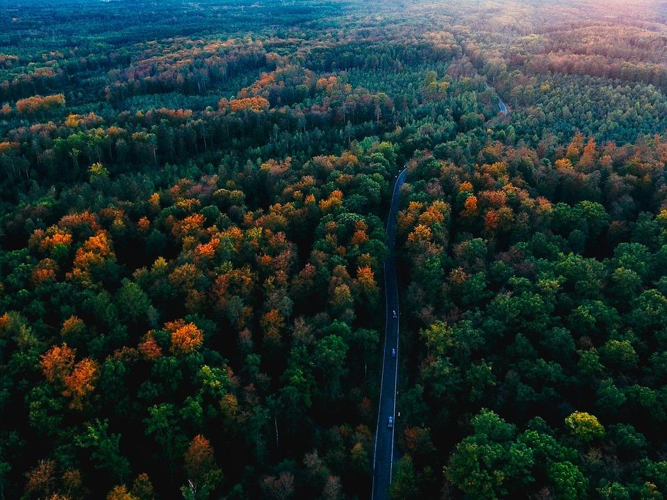 Connu Photo gratuite: Allemagne, Forêt Noire, Automne - Image gratuite  VL64
