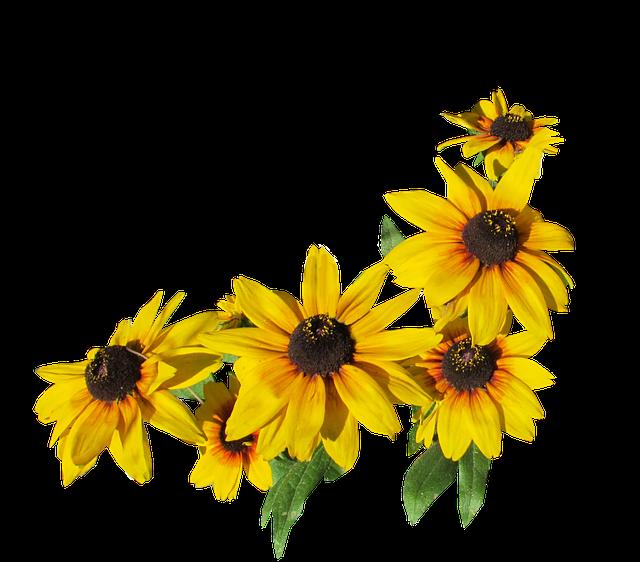 kukat keltainen leikkaus 183 ilmainen valokuva pixabayssa