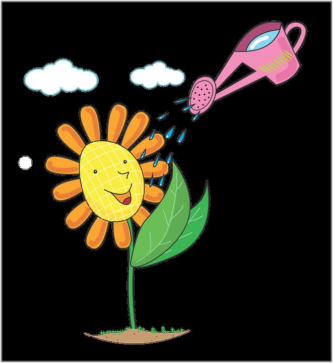 Rośliny, Kwiaty, Kwiaty Na Cykl Wodny, Woda Ostrzy