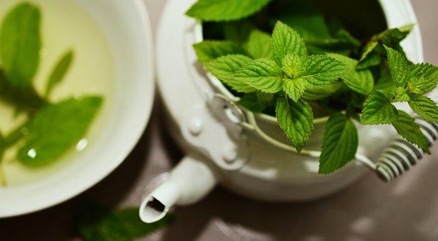 Pepermin, Tanaman Obat, Obat Herbal