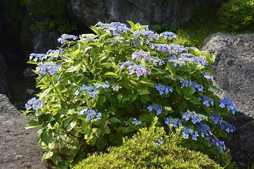花, 自然, 植物, 初夏, 箱根, 箱根, 箱根, 箱根, 箱根, 箱根