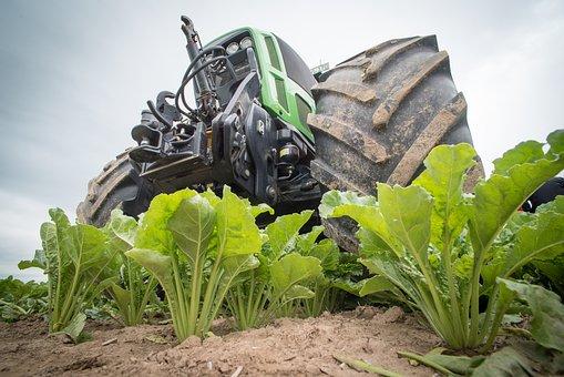 Производство свекловичного сахара нового урожая начнется с 1 августа