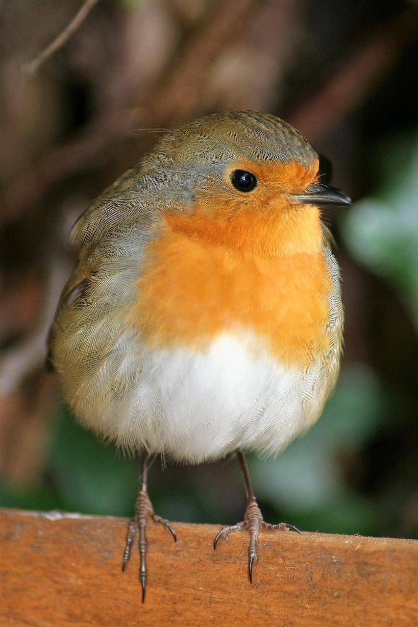 Улетающие птицы рисунки милая внешне