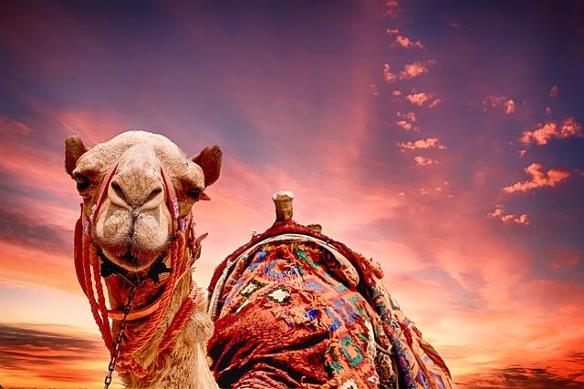 Camel Sunset Landscape 183 Free Photo On Pixabay