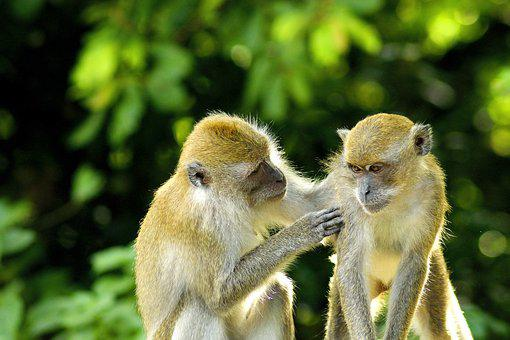 Image of: Iphone Monkey Animal Love Baby Wildlife Pixabay Green Monkeys Images Pixabay Download Free Pictures