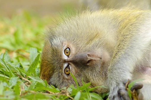 猿, 動物, 愛, 赤ちゃん, 野生動物, 哺乳動物, 自然, かわいい