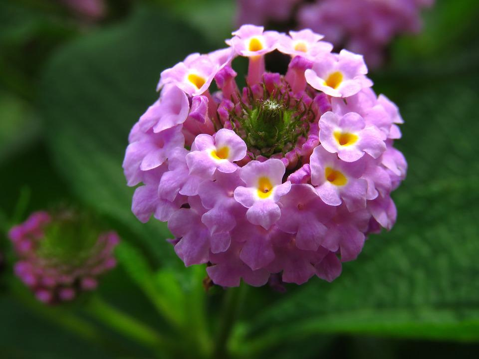 25  ideias exclusivas de Flores de croche no Pinterest   Croche ...