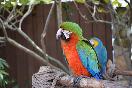 Macaw, Parrot, Bird, Colorful, Green