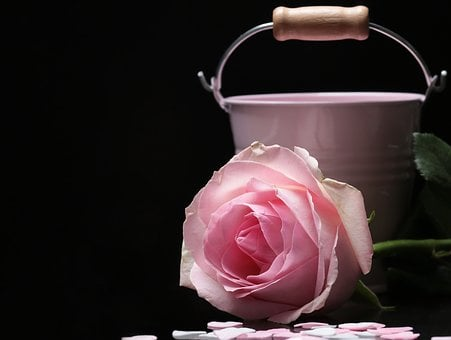 Rose, Floribunda, Bucket, Pink,Know more about the days leading up to Valentine's day like Rose Day, Chocolate day and Anti-Valentine's day like break up day, slap day and more.