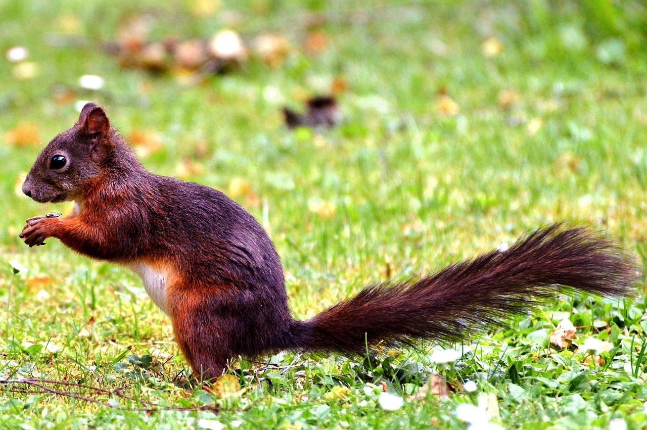 здоровье фотографии всех лесных животных сможете найти информацию