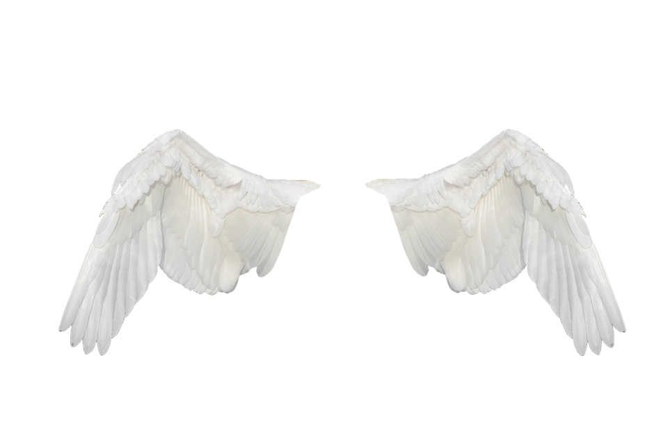 Free Illustration: Wings, Wings Ave, Flight, Fly