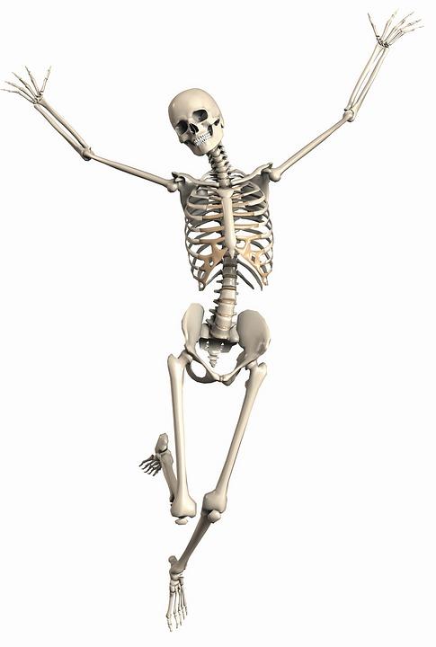 Skeleton Female Endoskeleton · Free image on Pixabay