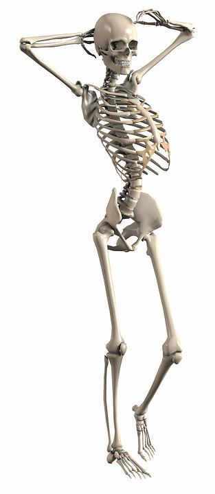 Skeleton Female Endoskeleton Free Image On Pixabay