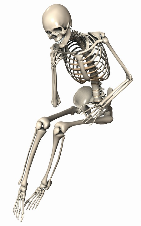Skeleton Sitting Female · Free image on Pixabay