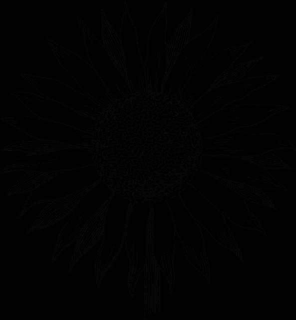 Sunflower Flower Line Art 183 Free Vector Graphic On Pixabay