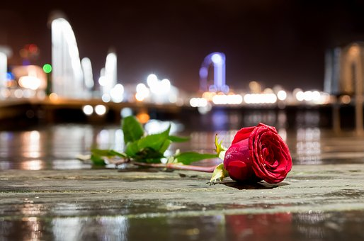 Flower, Rose City, Sea, Rain, Fragrance