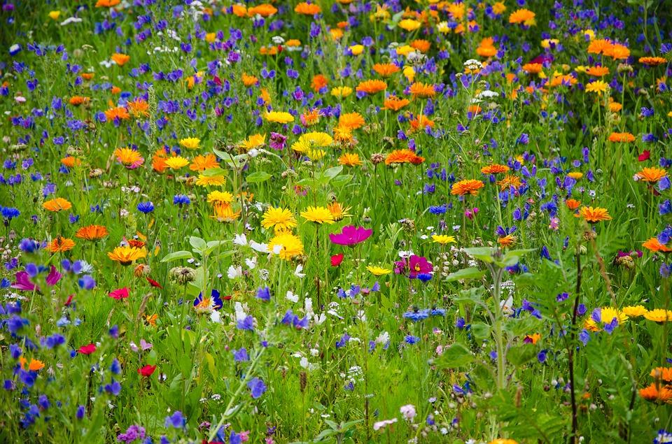 Bunte B Der kostenlose illustration blumenwiese wildblumen kostenloses bild auf pixabay 2509969