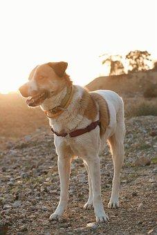 Dog, Nature, Fun, Lovely, Desert, Happy
