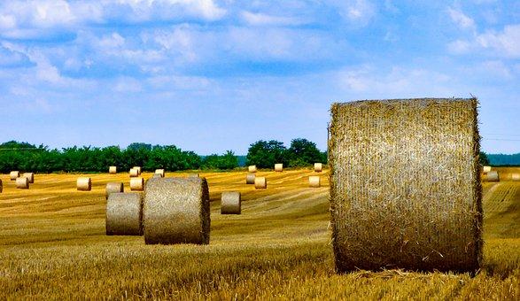 Feld, Weizen, Ernte, Landschaft, Korn