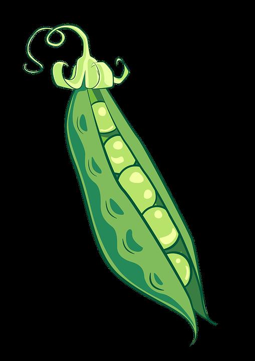 peas pea pod food  u00b7 free image on pixabay clipart royalty free starfish clip art clipart royalty free campfire clip art