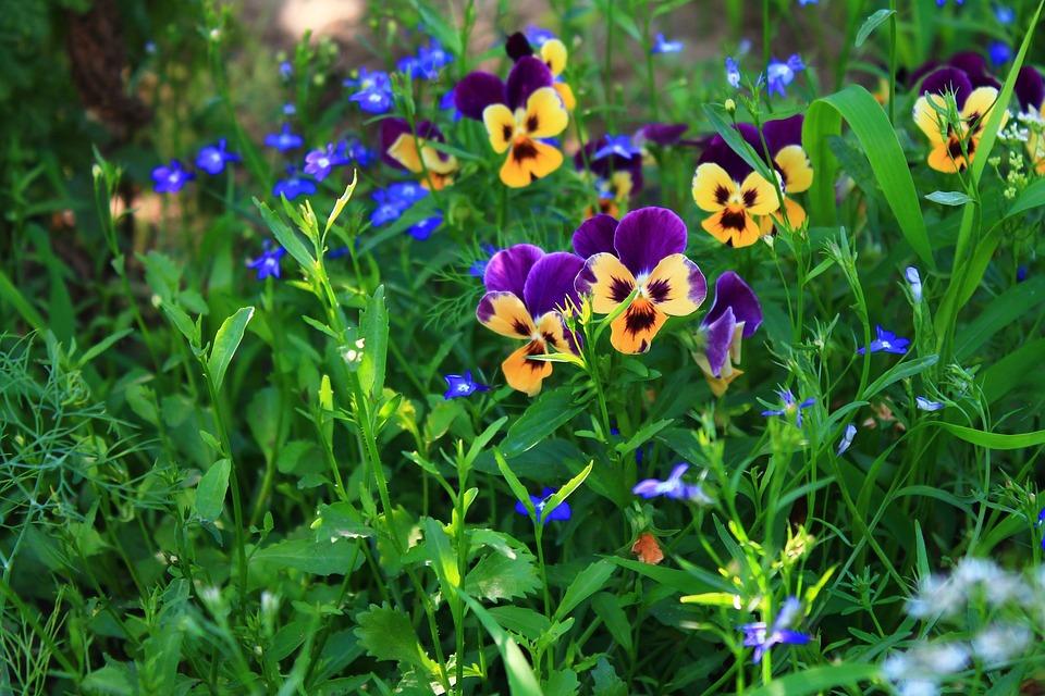 Природа горы цветы фото