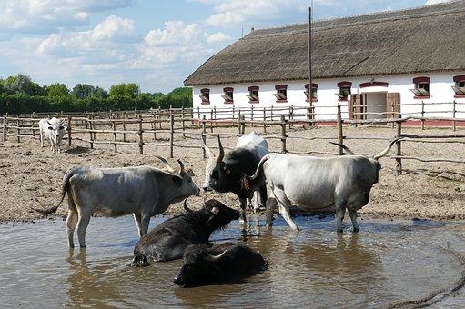 Puszta, Hungary, Tourism, Horses