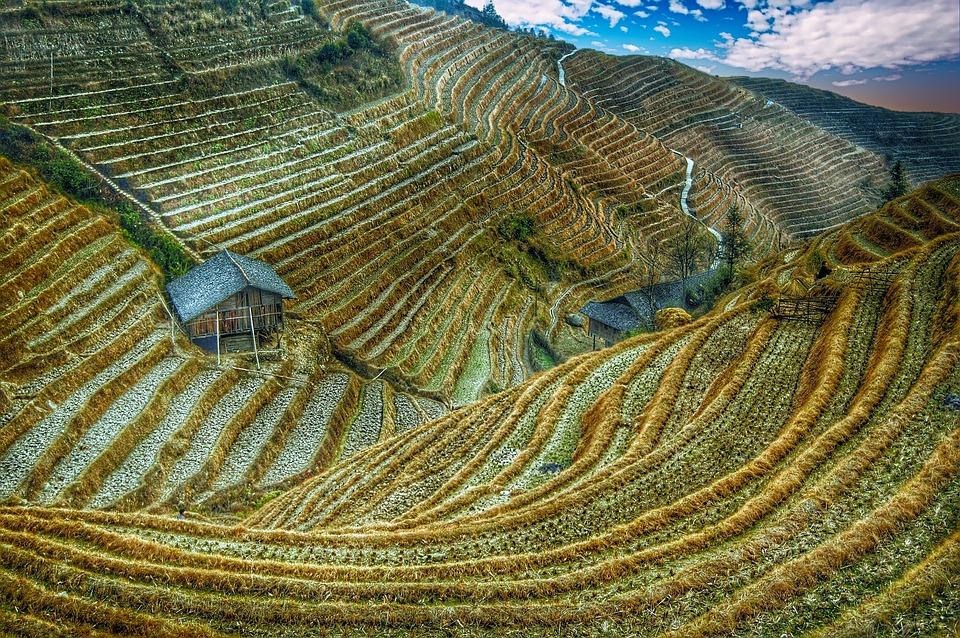 Campo De Arroz China Asia Foto Gratis En Pixabay